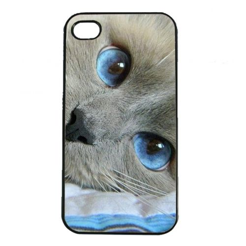 Csodaszép kékszemű kiscica -  Cicás Apple Iphone 4 4s tok