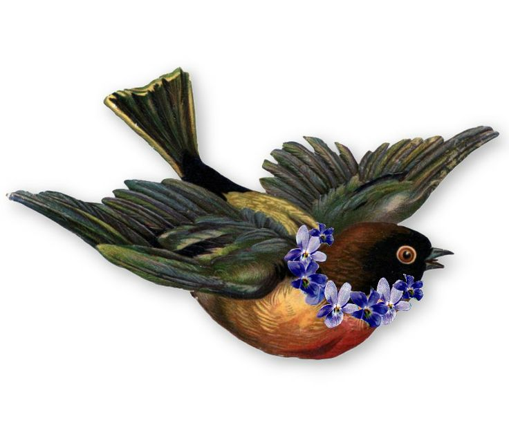Vintage Bird Illustration Flying | www.pixshark.com ...
