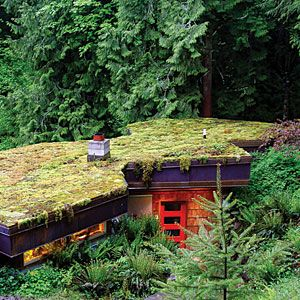 Make your own green rooftop in 3 simple steps:    1. In fall, scrape a handful of green moss from a rock or path (or ask a friend to share some).     2. Shred the moss into a blender with 1 cup buttermilk; mix to the consistency of a thick milkshake.     3. Paint the mixture onto the roof, a rock, or other surfaces where you want it to grow and spread. Damp, shaded locations are best.