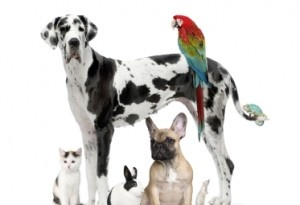 Your pets astrology