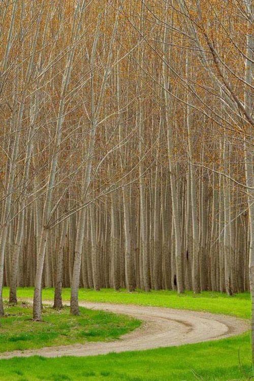 Winding through trees