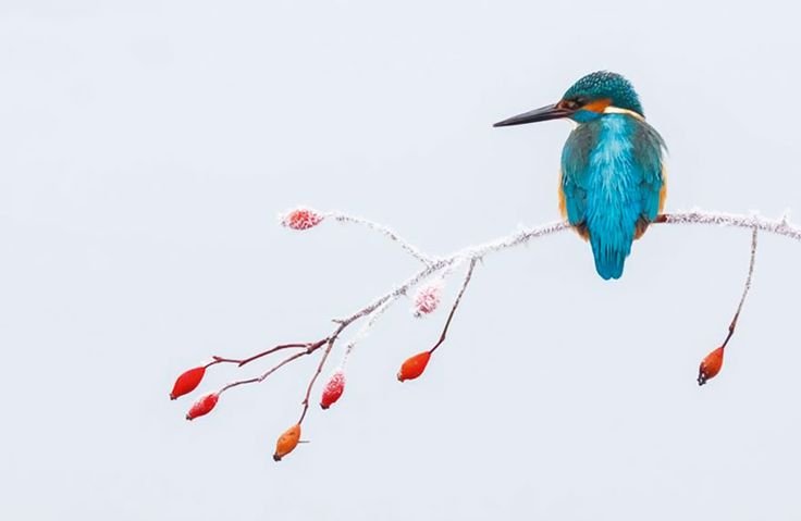 Best Bird Photos Of 2017 Have Been Announced, And They're Truly Amazing