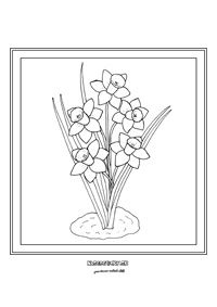 Narcis - jarné kvietky