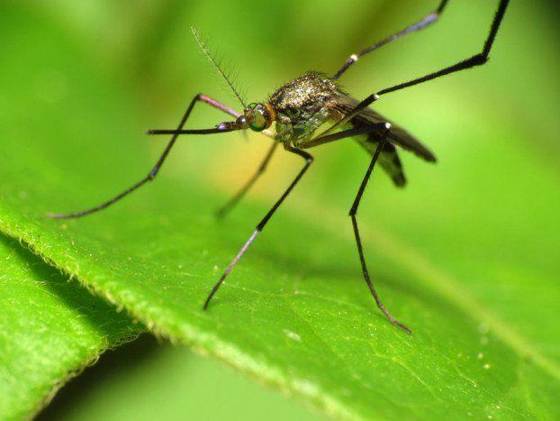 Die besten 25+ Ameisen hausmittel Ideen auf Pinterest - was hilft gegen ameisen in der küche