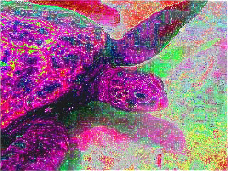 trippy-turtle-nina-panicci.jpg (900×675)   Animal ...