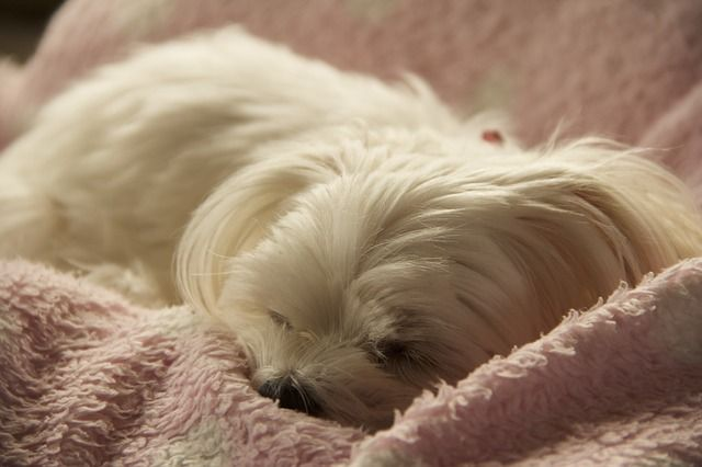 The 5 Cutest Hypoallergenic Dogs in the History of the Universe