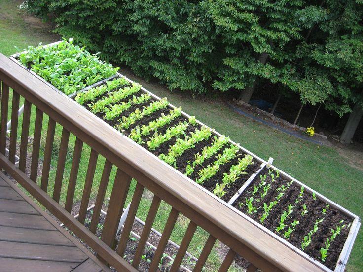Deck U0027Saladu0027 Garden Thatu0027s Deer Proof. | How Does Your Garden Grow . . . |  Pinterest | Gardens, Container Gardening And Extensions