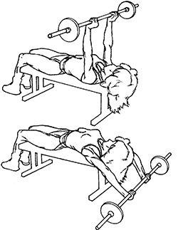 Medium-Grip Straight-Arm Barbell Pullover   Exercises ...  Straight