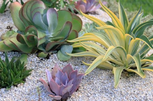252 best garden media newsroom images on pinterest for Low maintenance desert plants