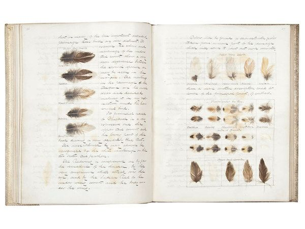 Best Field Notes Herbarium Collections Images On
