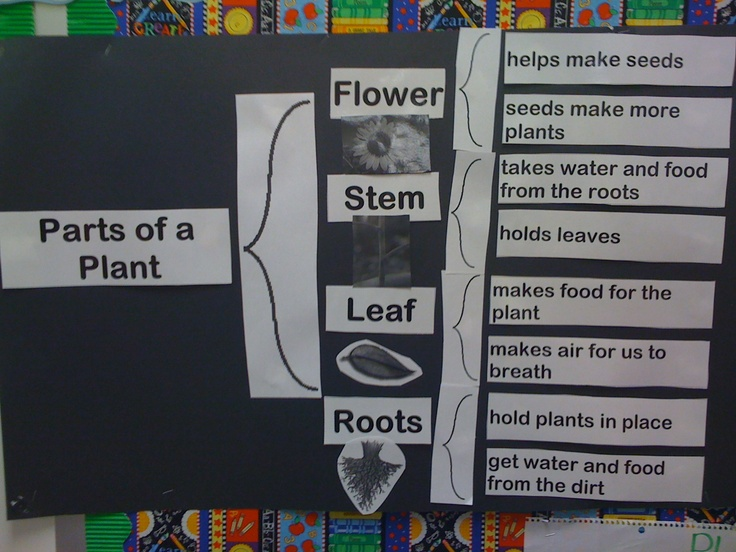 42 best thinking maps images on pinterest fractions math plant brace maps sciox Image collections