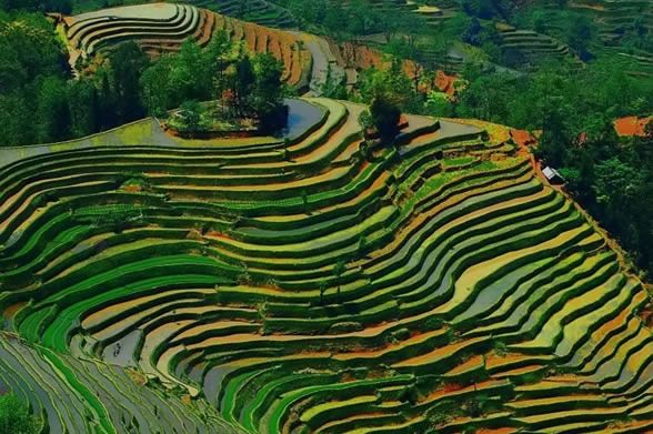 Google image result for for What does terrace farming mean