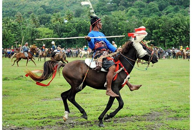 A Pasola rider preparing to throw his spear during the pasola war festival at Wanokaka village in West Sumba, East Nusa Tenggara. The Pasola ritual is a war festival between two groups with hundreds of riders on horseback throwing spears to the opposing group.