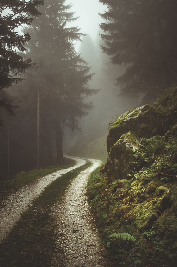 Best 25 Misty Forest Ideas On Pinterest Forest Photography Foggy Forest And Forest Landscape