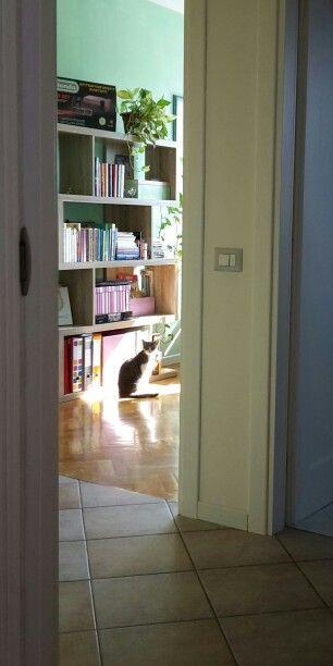 In ogni casa ci vorrebbe almeno un animale peloso e una libreria...