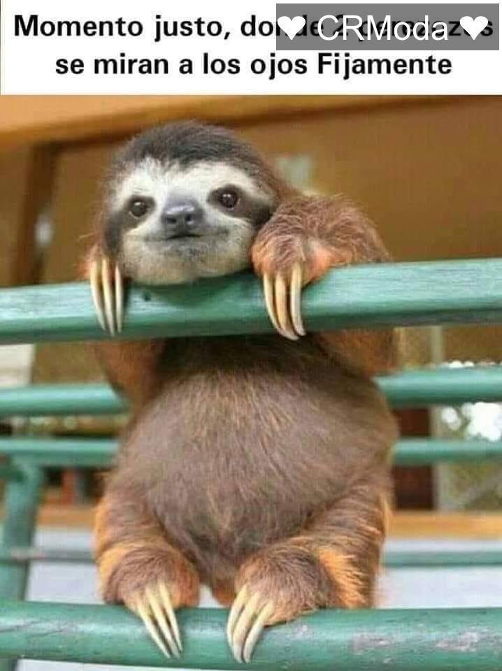 Crmoda Holi Puravida Sloth Animals Senior Dog