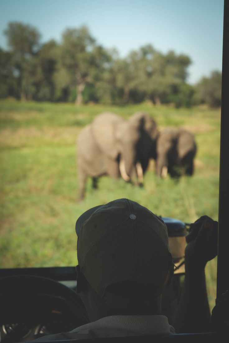 Thinking about an African Safari? South Luangwa National Park in Zambia is the perfect place to go!