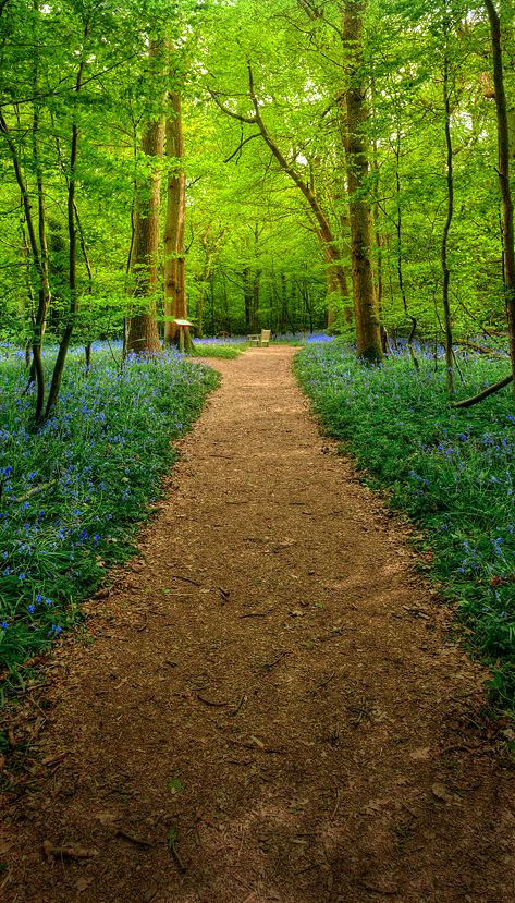 The Bluebell Walk, Arlington, East Sussex