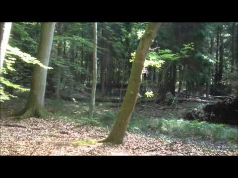 Guidet meditation i skoven - YouTube