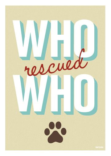 Want to be rescued by a shelter pet? Click to search all BC SPCA adoptable pets including cats, kittens, dogs and puppies