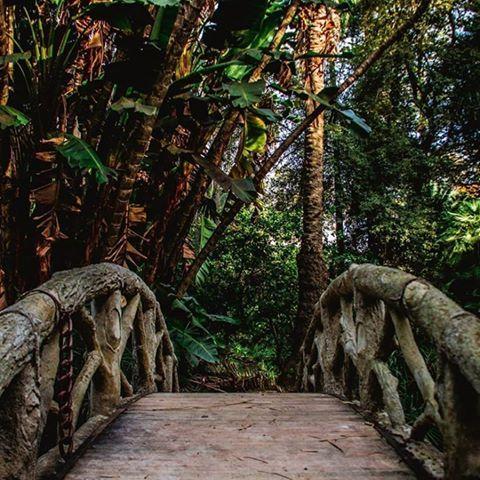 Jardin d'essai d'El Hamma - Alger . Copyright : @axelkbj hashtag, use #tourismAlgeria ➖➖➖➖➖➖➖➖➖➖➖➖➖➖➖➖➖➖➖ #Algeria #adventure #africa #photography #amazing #dz #tourism #tourismAlgeria #nature #algerie #الجزائر #السياحة #elhamma #earthofficial #garden #dzair #instatravel #Algiers #Oran #Constantine #grandmaghreb #capitale #plant #kabyle #oasis #sahra #afrique #Bejaia #africa #northafrica