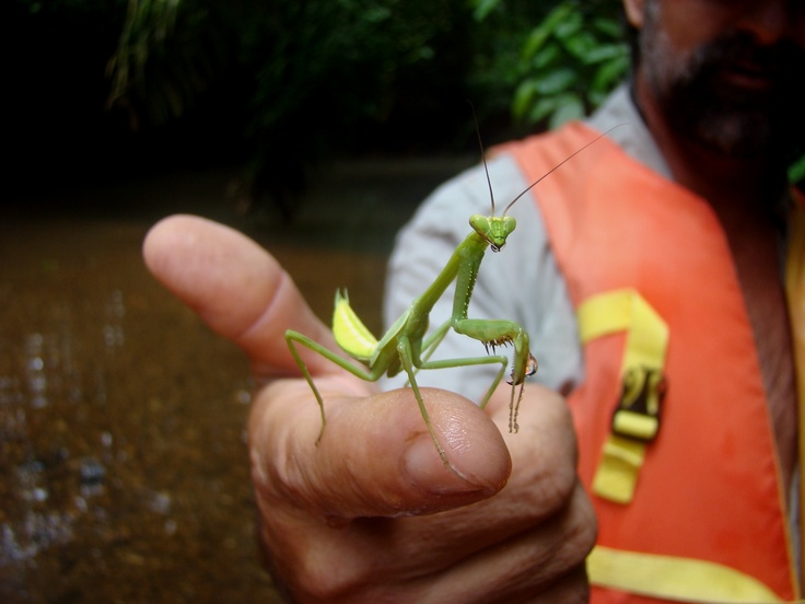 Criket in the Panama Canal. Don't just visit the Canal... LIVE IT! http://www.junglelandpanama.com/
