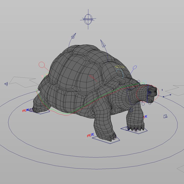 galapagos tortoise rigged ma