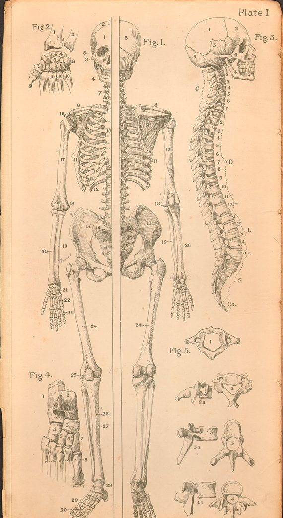 Cyber Monday 20% Off Sale- Code 20OFF 1920s Vintage Anatomy Art Print Art by AgedPage on Etsy, $32.00