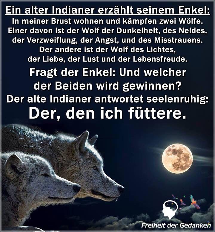 Life Indianer Wolf Sprüche Sprüche Zitate