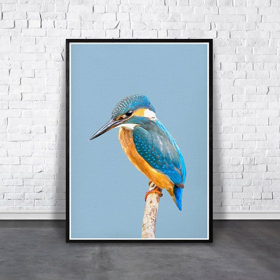 INSTANT DOWNLOAD Digital print of colorful bird on blue background for instant download.  Affordable easy way to decorate and add a colorful vitality touch to your home, your nursery and office area. Refresh your walls and personalized your living and work space with style!  Simply download your art files, print, frame, and hang - its that easy!  -------- INCLUDED FILES --------  4 high resolution 300dpi JPG image files + instruction sheet.  • 2x3 ratio file for printing the following sizes…