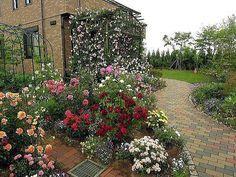 Розы:секреты выращивания