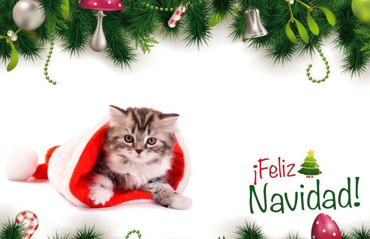 #Tarjeta de #Navidad Lindo #Gatito #kitty #kittycat #whiskas #christmas #cards #free #greetings #greetingsfree http://bit.ly/11c95L3