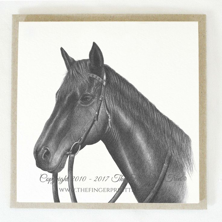 Gift card - Horse:  Cards! by The Fingerprint Tree® is our couture range of gift cards featuring illustrations by Ray Carter, Chief Artist & Founder.  Made-to-order and Giclée printed at our Southern Highlands studio.   We sell direct to the public and to retailers.