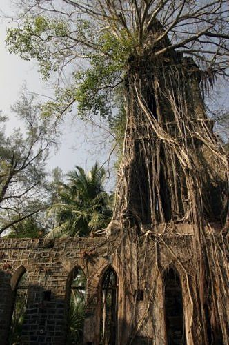 Jungle churches: This church ruin can be found on Ross Island, part of the Andaman and Nicobar Islands. The tree has taken over the church tower but also created a new roof.