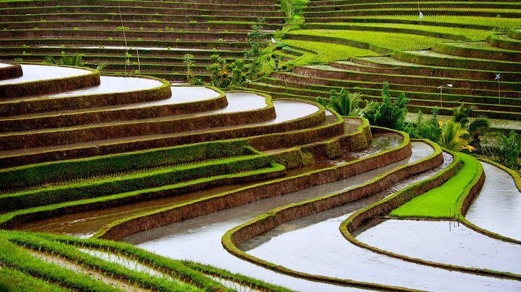 Gli scarti del riso come materiali da costruzione #energYnnovation #terra