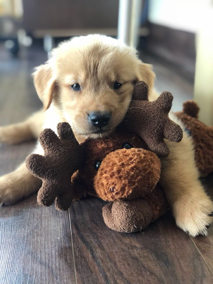Meet mylo and his favorite stuffed toy hes 45 days old
