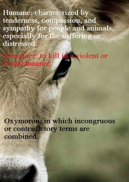 """There is no such thing as """"humane slaughter""""."""