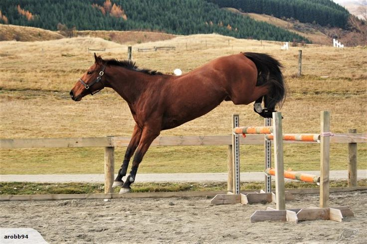 """""""Sky High"""" 17hh+ 6yo Bay mare By Immenhof Castello out of a dutch Irvine mare"""