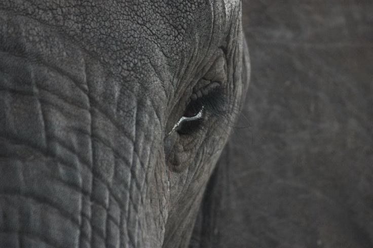 Kruger 2012