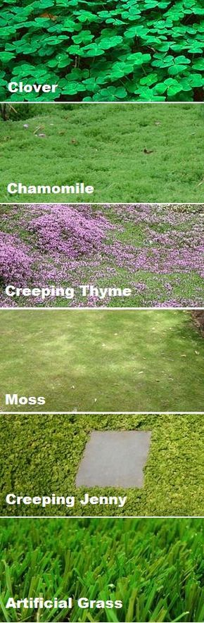 Ground cover instead of a grass lawn! Better for bees, environment and utility bill! (SO pretty!)