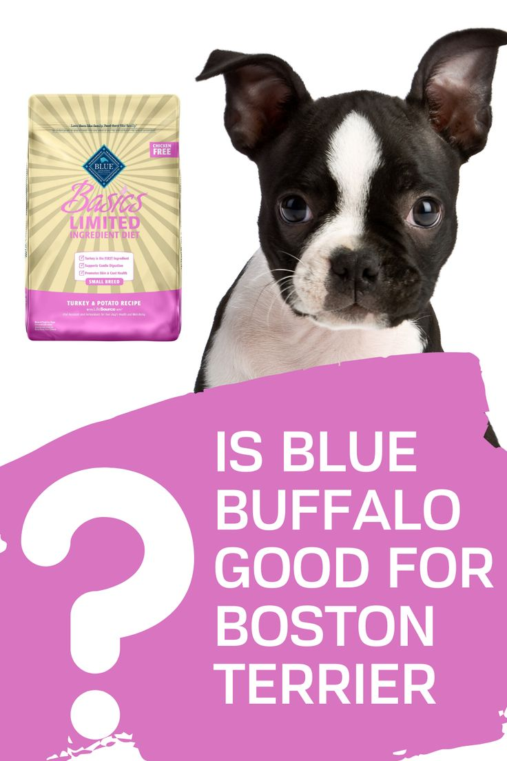 Blue buffalo for boston terrier good or not in 2020