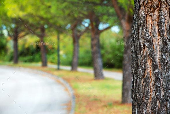Park Tree And Defocused Blur Background With Images Blurred