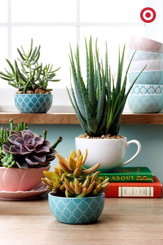 Uma forma simples e barata de decorar a casa é usar xícaras como vasinhos para suculentas e cactos. Você pode comprar novas xícaras ou usar aquelas que já não formam pares. Veja mais inspirações no post: Suculentas em vasinhos e xícaras sobre livros na mesa. Arranjos de Plantas Suculentas em Xícaras