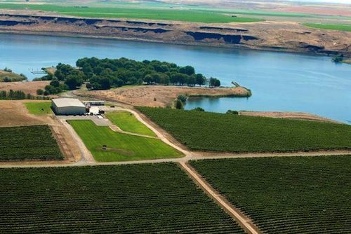 Gordon Estate's vineyard is set on a bluff above the Snake River near Pasco, Wash.