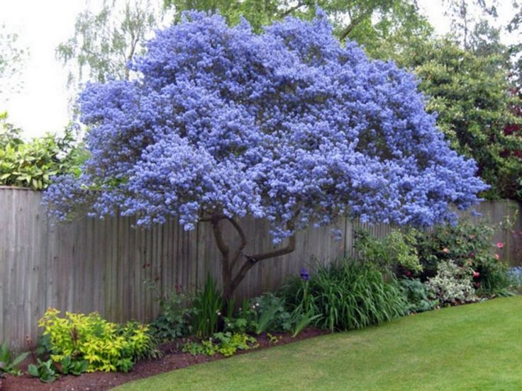 63 Lovely Flowering Tree Ideas For Your Home Yard Small Landscape Trees Trees For Front Yard
