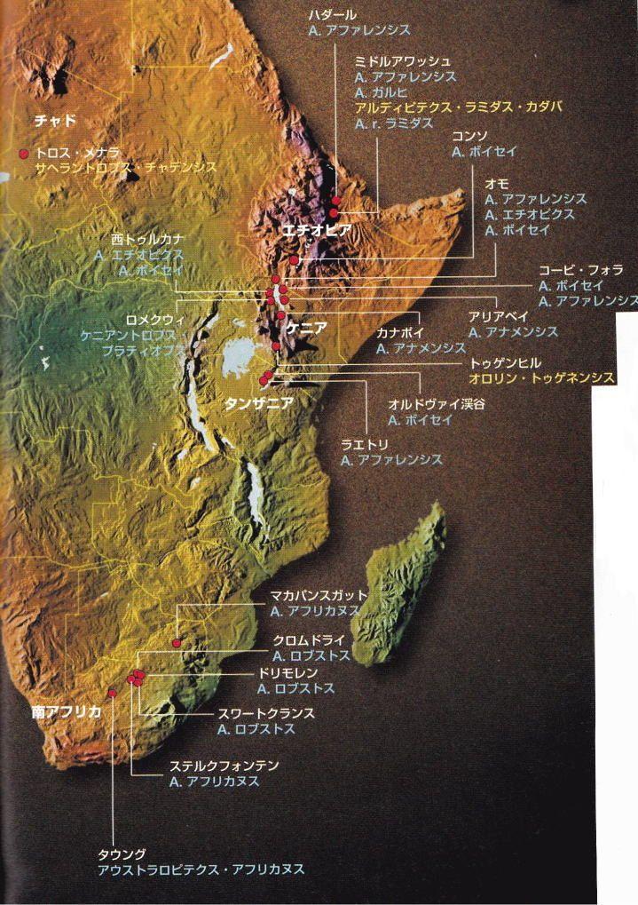 主な化石と出土地(「人間性の進化 700万年の軌跡をたどる」)