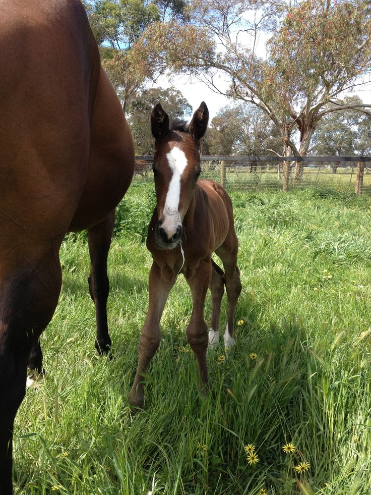 Lovely colt by Stryker from Unblemished (Danzero)
