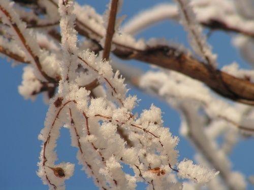 Bármilyen lelkiismeretesen is készítettük kertünket a télre, akkor is előfordul, hogy szembesülünk olyan hatásokkal, amelyek kárt okozhatnak növényeinkben.