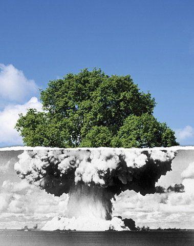 COLLAGE - leven en dood (boom en atoombom)