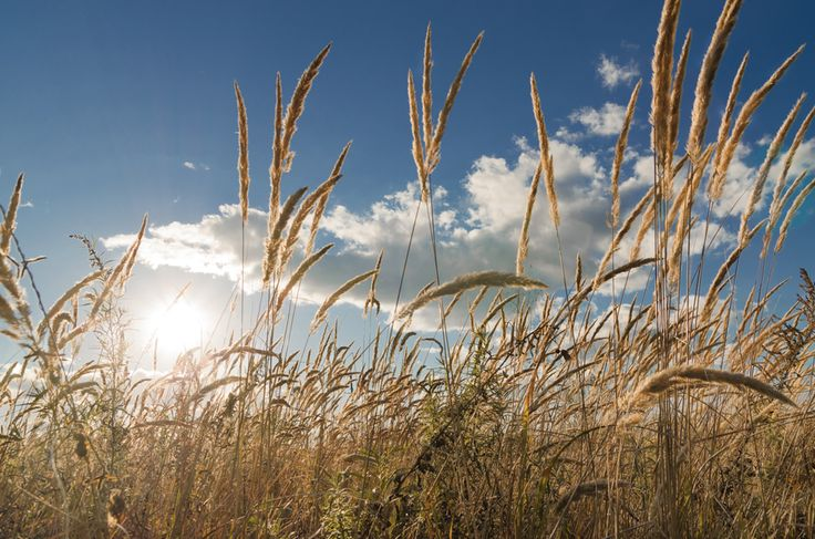 Very cool grass! #landscape